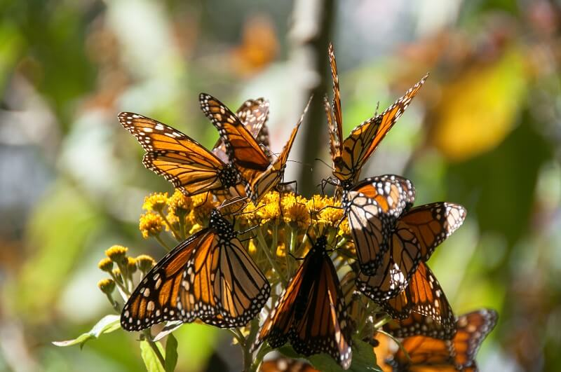 Texas Eminent Domain News - Border wall and Butterfly Sanctuary