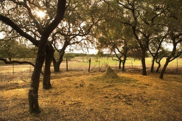 Landowner Rights For Individuals Facing Condemnation